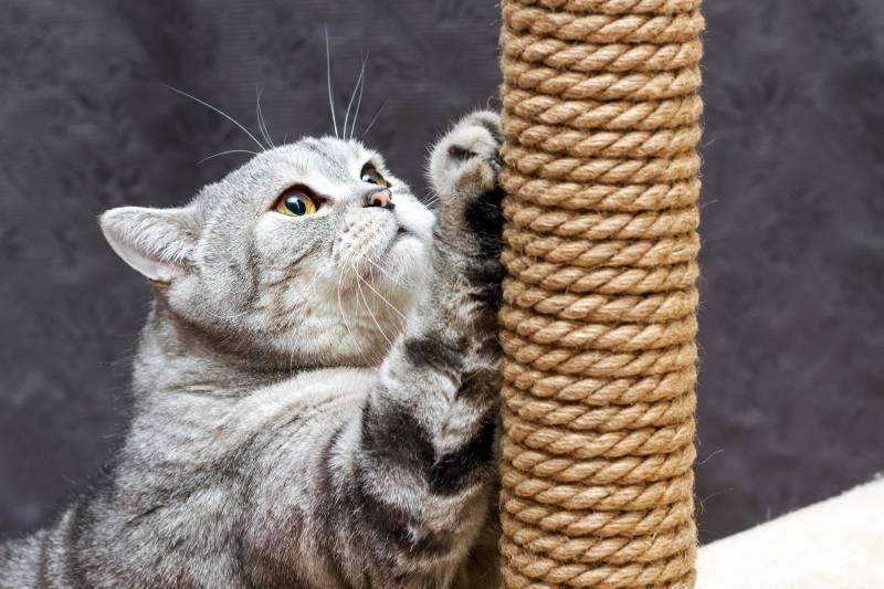 Почему кошка грызет когти