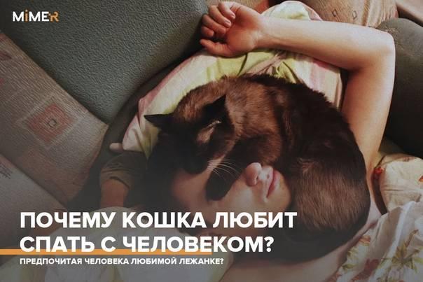 Почему кошки любят спать с хозяином