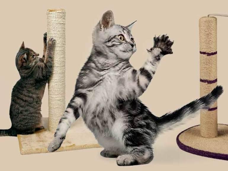 Советы как приучить кошку к когтеточке