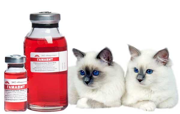 Инструкция по применению гамавит для кошек: правильная дозировка и использование медикамента, состав и аналоги
