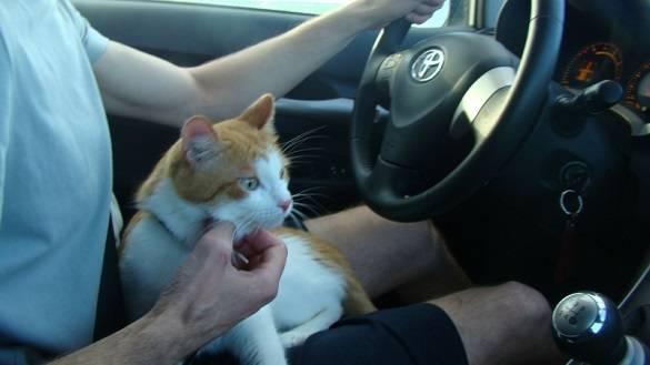 Что нужно знать для путешествия с животными