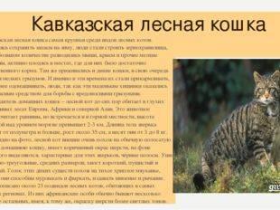 Кавказская лесная кошка: фото и описание дикого животного, его образ жизни и повадки