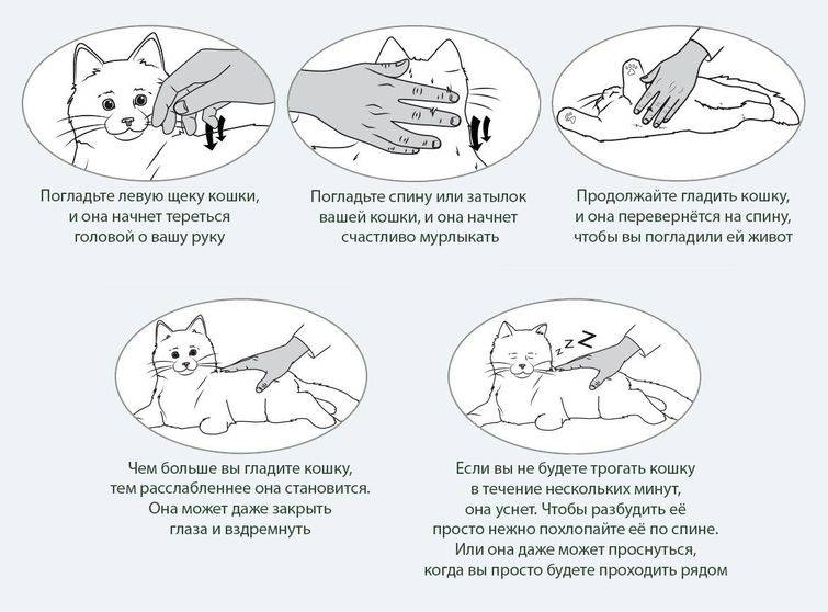 Почему и как мурчат коты: обзор причин мурлыканья кошек