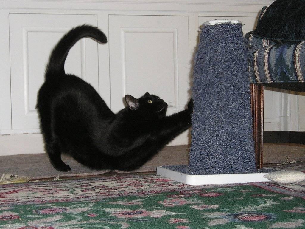 Как отучить кошку драть обои и мебель – советы, рекомендации