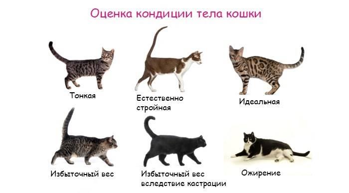 Почему кот худой и не толстеет
