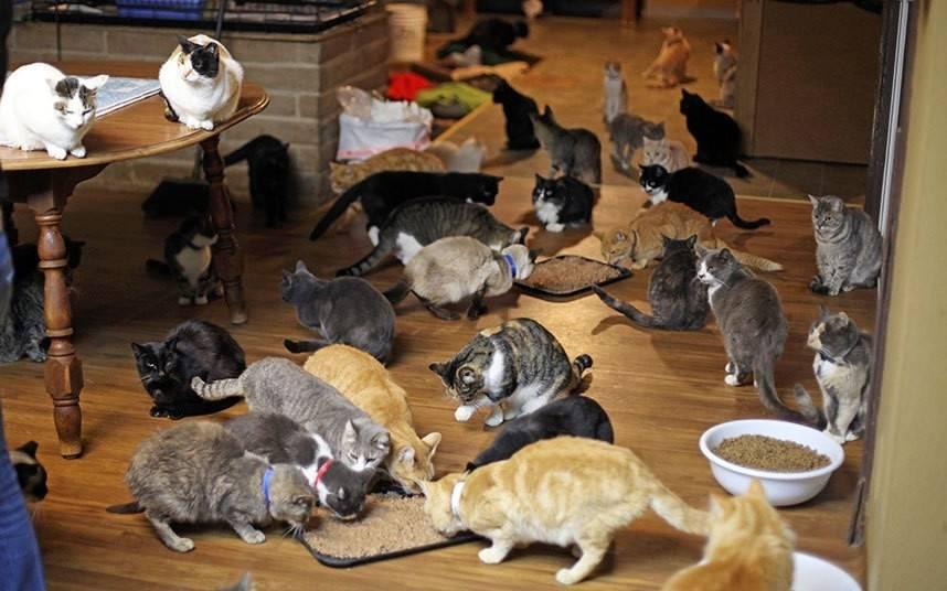 Сколько существует пород кошек в мире | количество видов