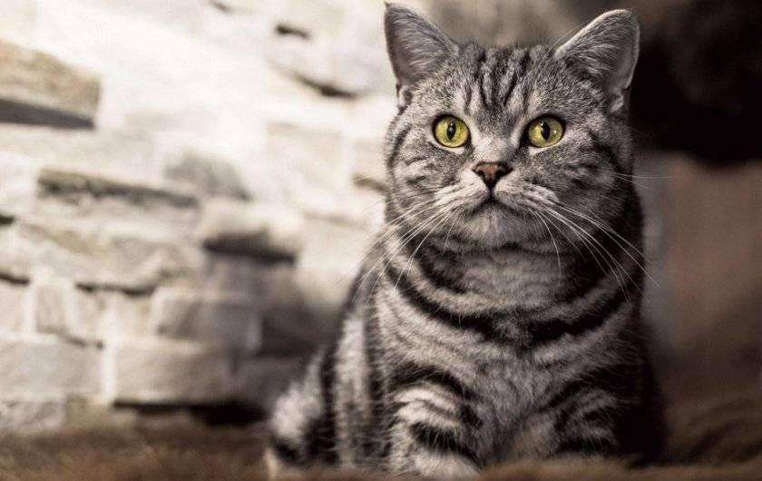 Как заставить кота пить воду?