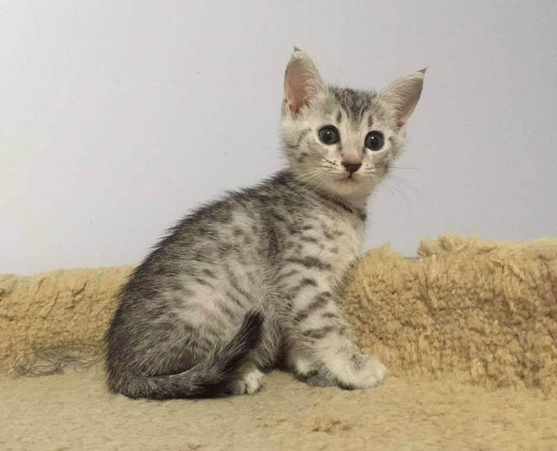 Уход за новорожденными котятами - кормление новорожденных котят, режим кормление, нормы кормление, уход за глазами котят, уход за когтями, купание котят, уход за маленьким котенком - всё о кошках и котах