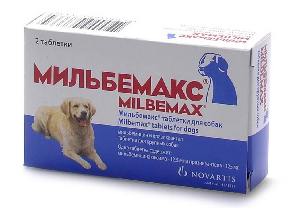 Мильбемакс для кошек – обзор препарата