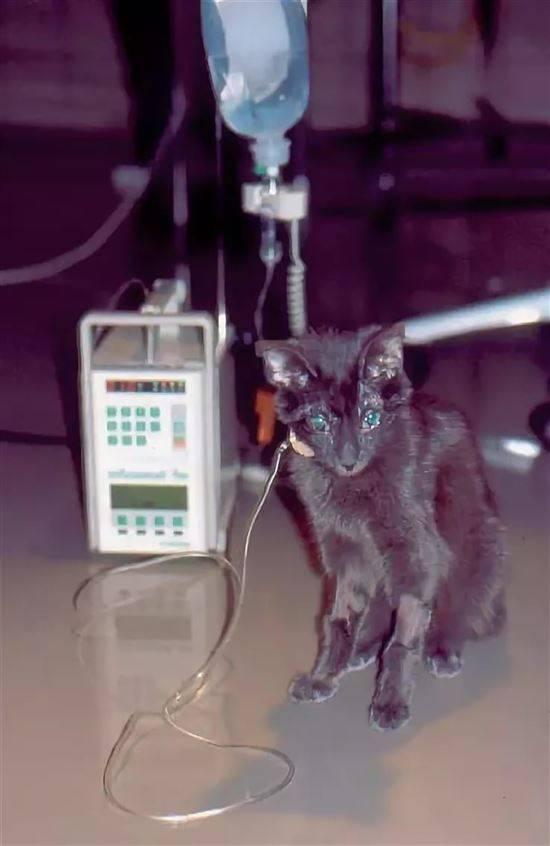 Как определить токсоплазмоз у кошек: диагностика и опасность для хозяина