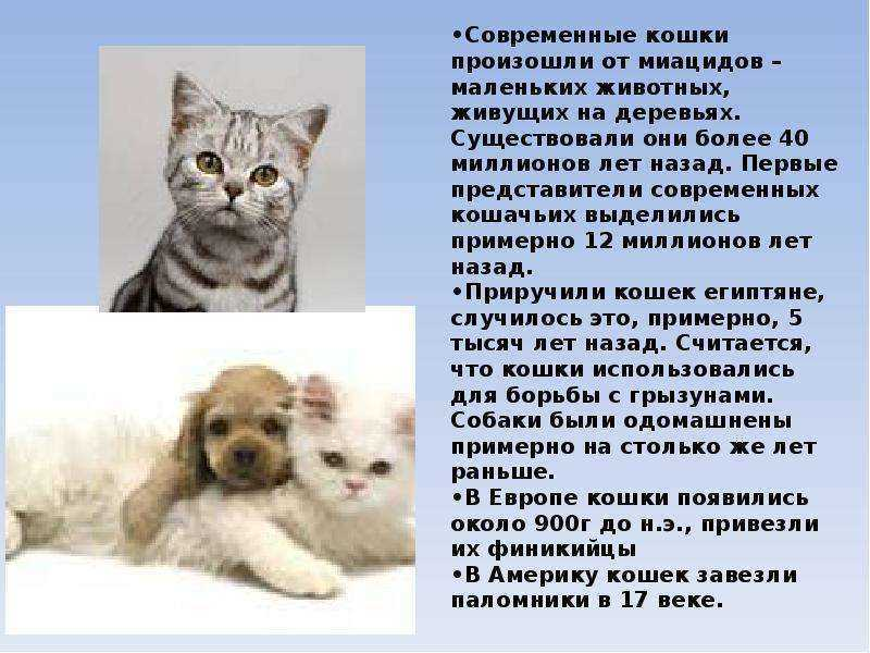Откуда появились кошки: предки, эволюция породы