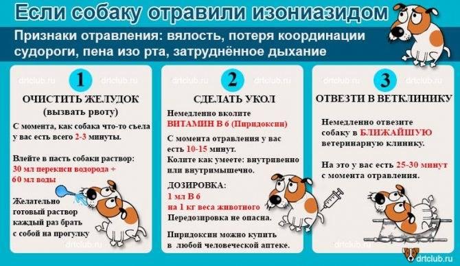 Отравление у кошки: симптомы, лечение, чем может отравиться кот
