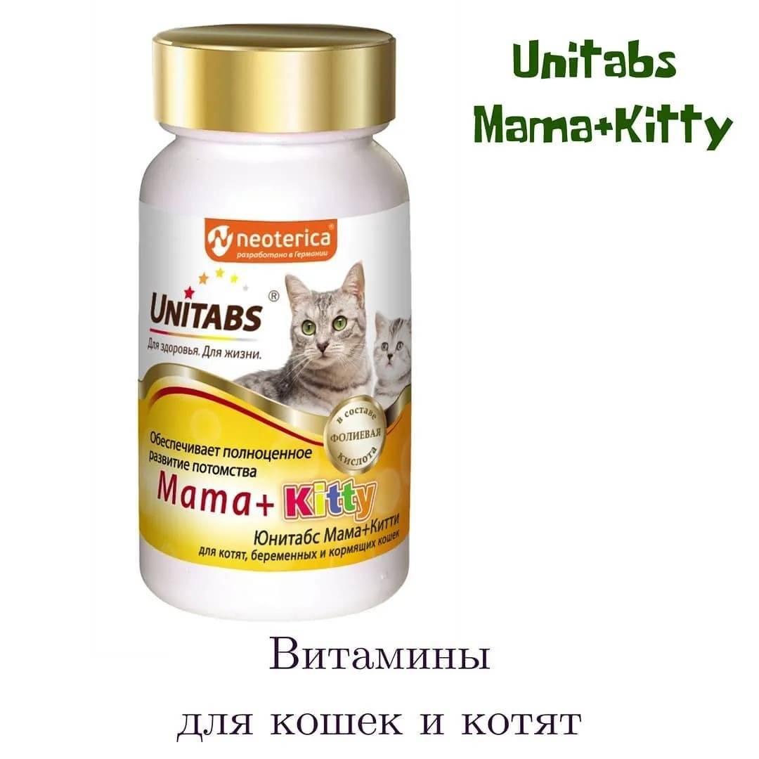 Витамины для котят: рекомендации, польза и отзывы