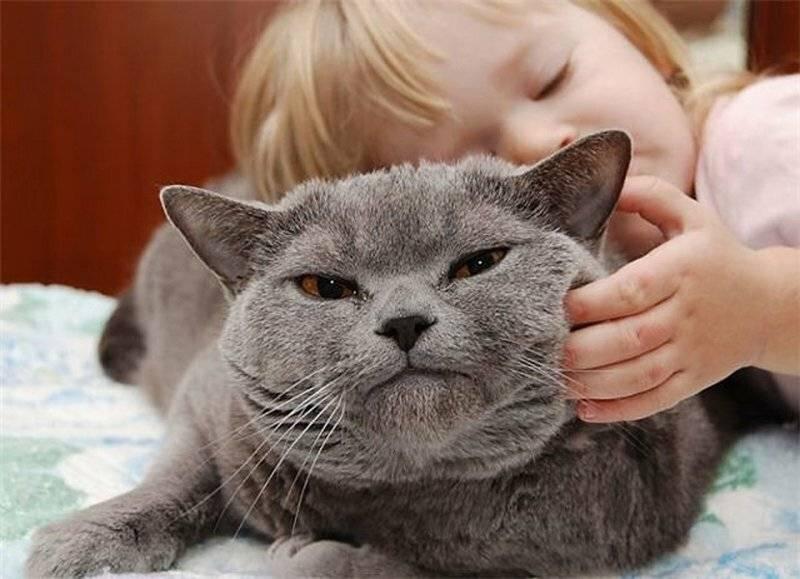 Почему кот не хочет чтобы его гладили. почему кот кусается, когда его гладишь: возможные причины.
