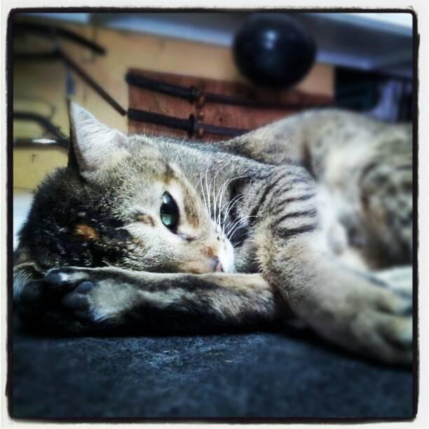 Простуда у кошек - лечение в домашних условиях простуда у кошек - лечение в домашних условиях