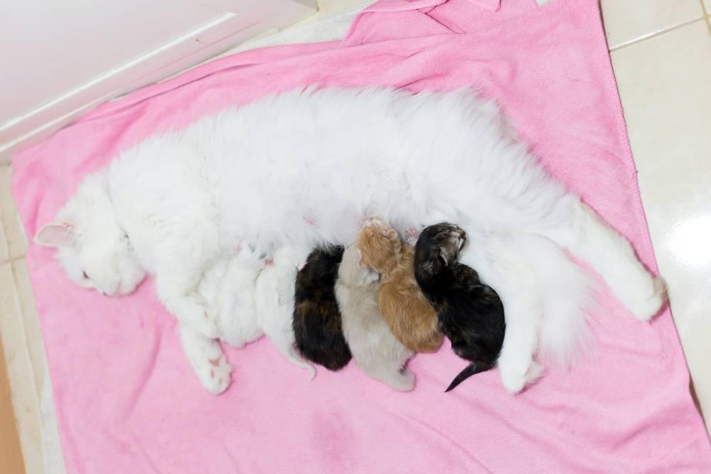 Как принимать роды у кошки: полезные советы