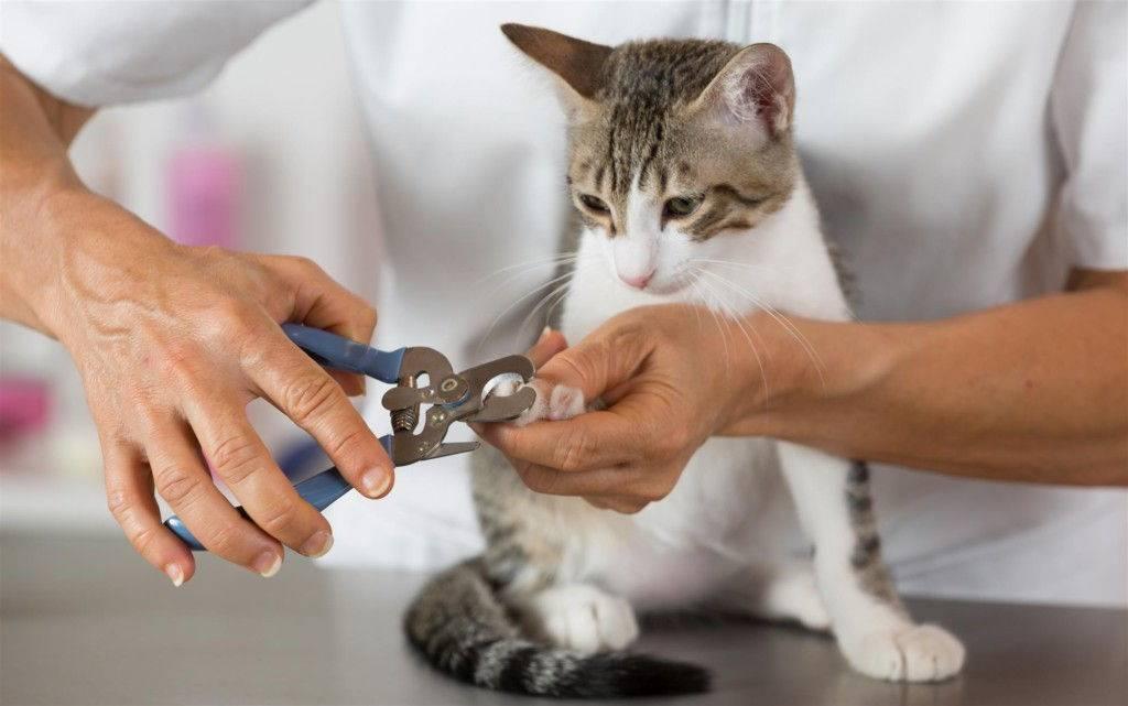 Условия для содержания и правила ухода за кошками