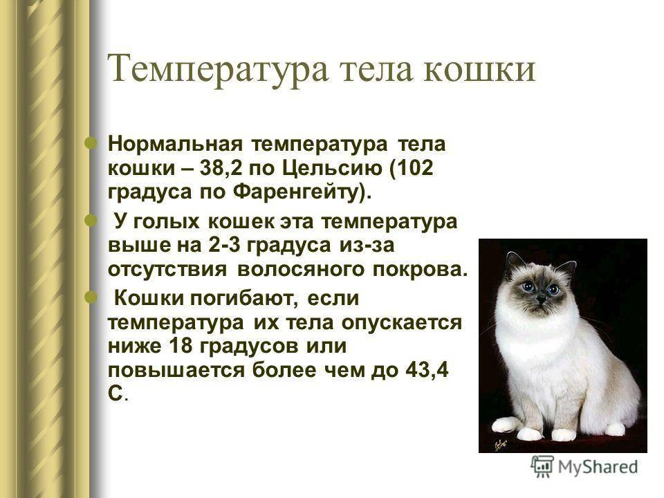 Какой рубеж температуры у кошек считается нормой? основные болезни вызывающие повышение - твой питомец