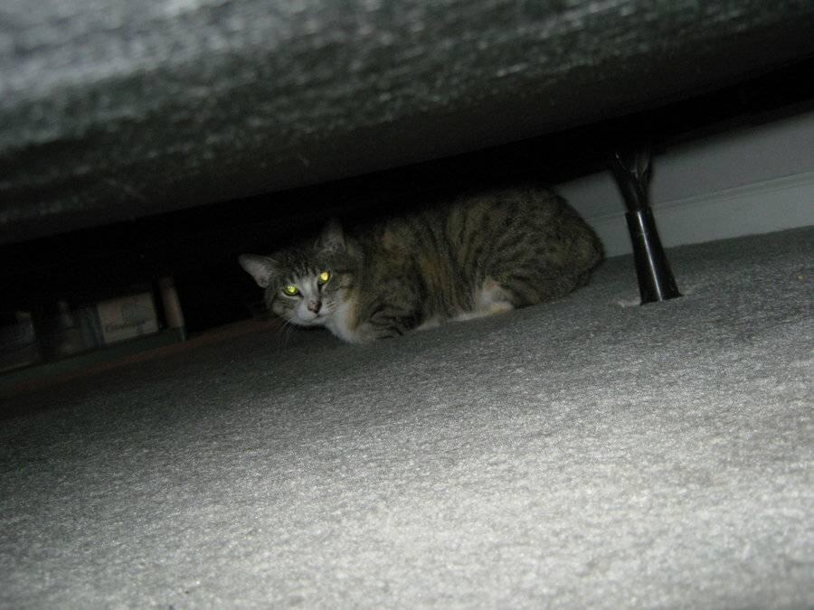 Чего боятся коты должны знать хозяева чего боятся коты больше всего