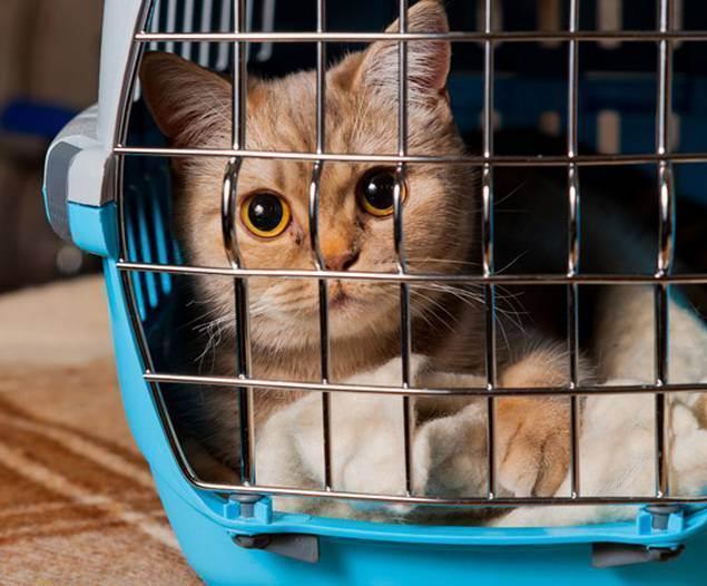 Ветеринарная клиника - ветеринарная клиника нефрологии веравет. ветеринар на дом