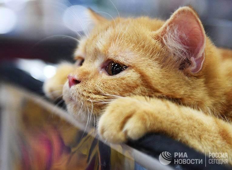 Кошки и их знаменитые хозяева