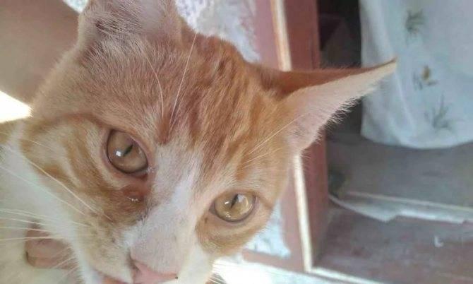 Кот чихает и слезятся глаза чем лечить