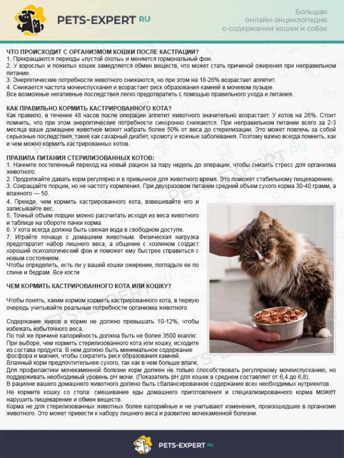 Почему кастрированным котам нельзя есть рыбу - oozoo.ru