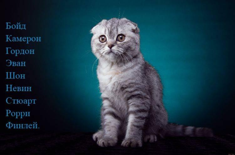 Красивые и редкие имена для кошек и котят девочек. список лучших имен русских, английских, японских, египетских для породистых и простых черных, серых, белых рыжих и трехцветных кошек девочек