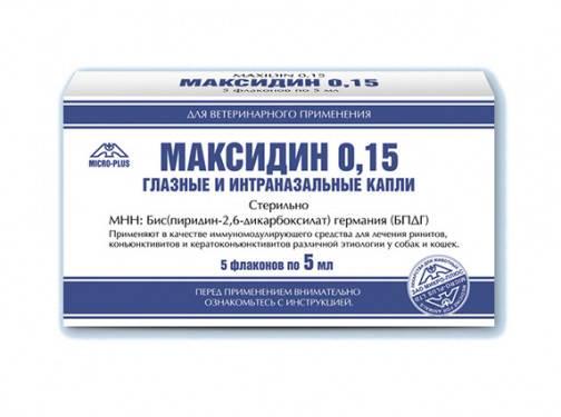 Максидин для кошек: описание препарата, состав, форма выпуска, применение, дозировка, противопоказания, аналоги