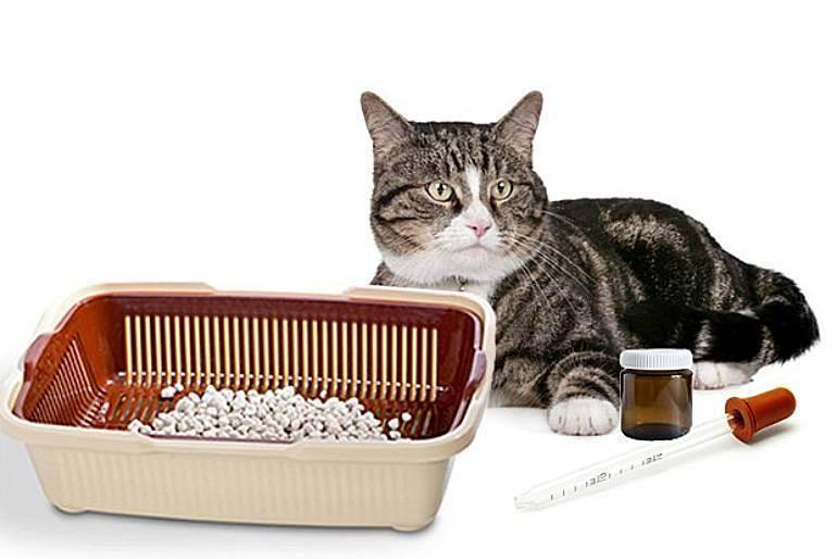 Как собрать мочу у кошки для анализа: когда лучше отбирать мочу, какую тару выбрать, методы сбора, советы