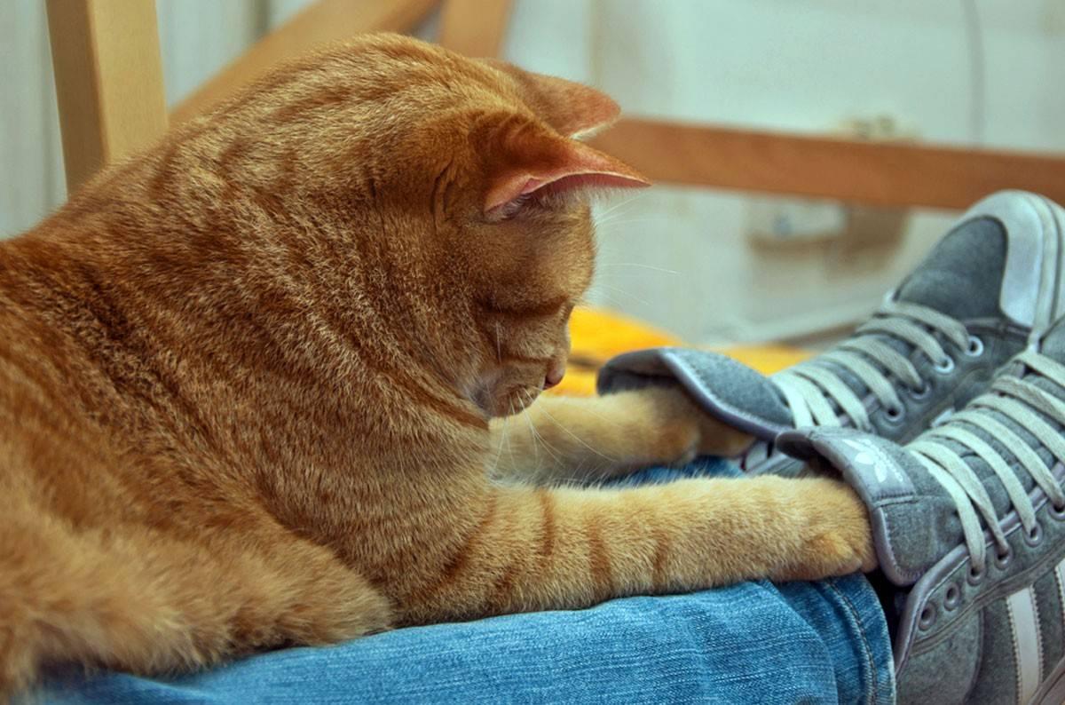 Что делать, если кот лижет лапу?
