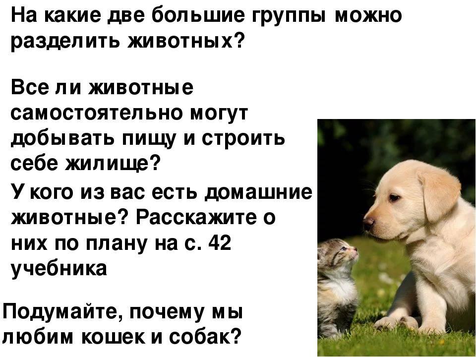Почему собаки не любят кошек?