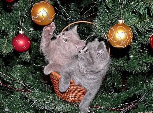 Осторожно! новогодние праздники!