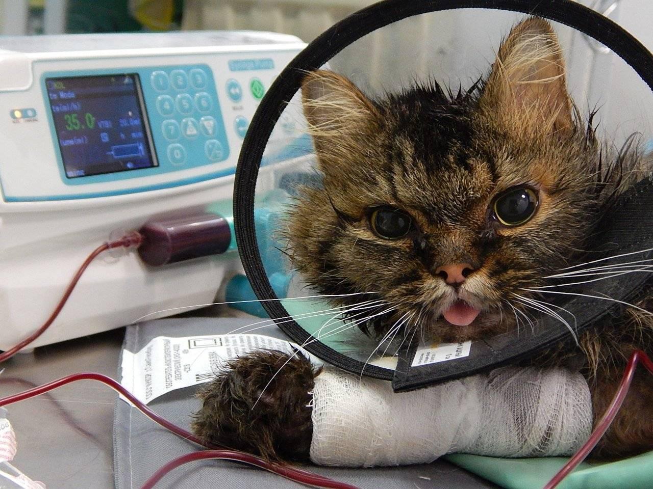 Коронавирус у кошек и котов: симптомы, лечение, тесты