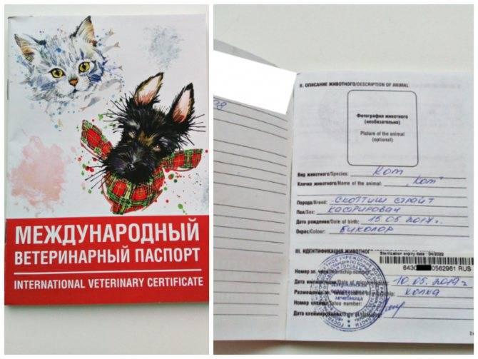 Как сделать и заполнить паспорт кошке, взрослой и беспородной, из личного опыта