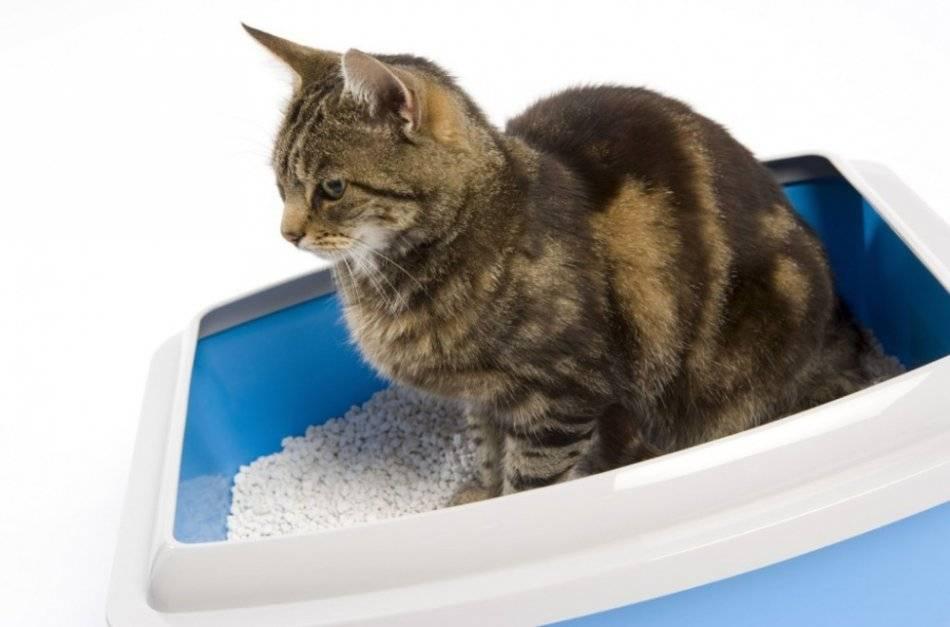 Чем можно помочь коту, который не может пописать в домашних условиях