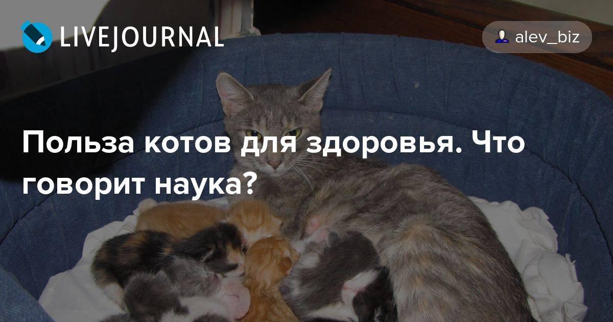 Польза кошек. кошка – друг человека!