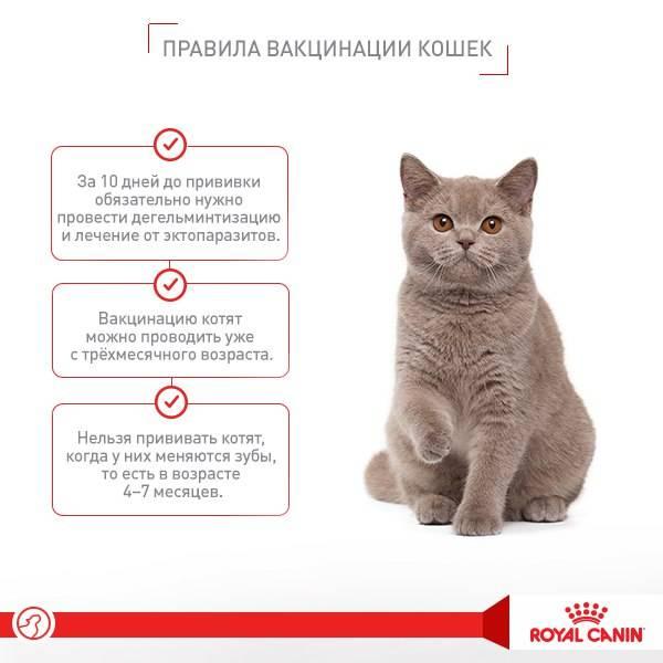 Вакцинация кошек: какие нюансы стоит учесть
