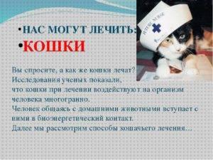 Самые опасные и распространенные болезни кошек, передающиеся человеку