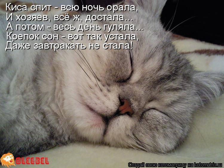 Котёнок постоянно спит: почему, что делать, надо ли его будить, надо ли вести к ветеринару. сонливость у котят: норма или нарушение?