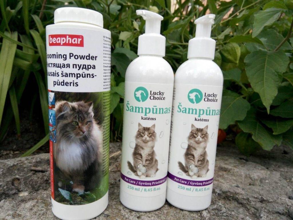 Шампунь от блох для собак и кошек: обзор популярных средств, правила применения, принцип действия, противопоказания