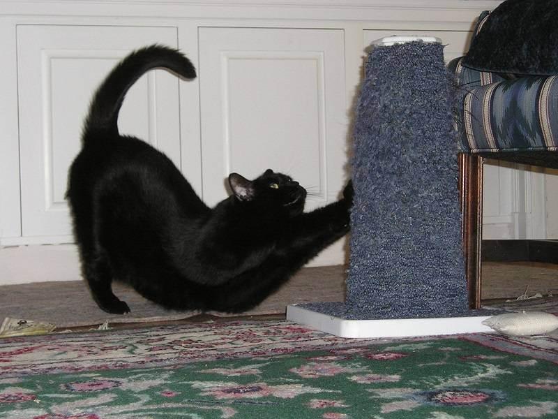 Воспитываем шкодников: как наказать кошку вне зависимости от возраста правильно