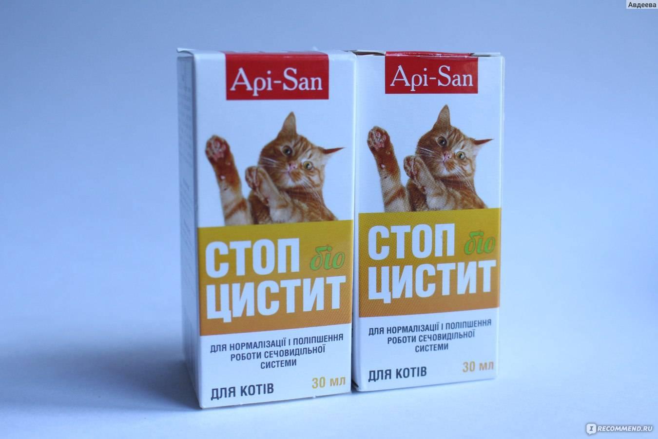 Антибиотики для котов от простуды — простудные заболевания
