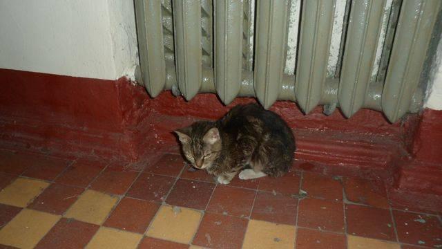 Нужно ли кастрировать кота: что будет если не делать этого