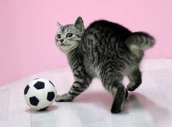 Гороскоп для собак и кошек