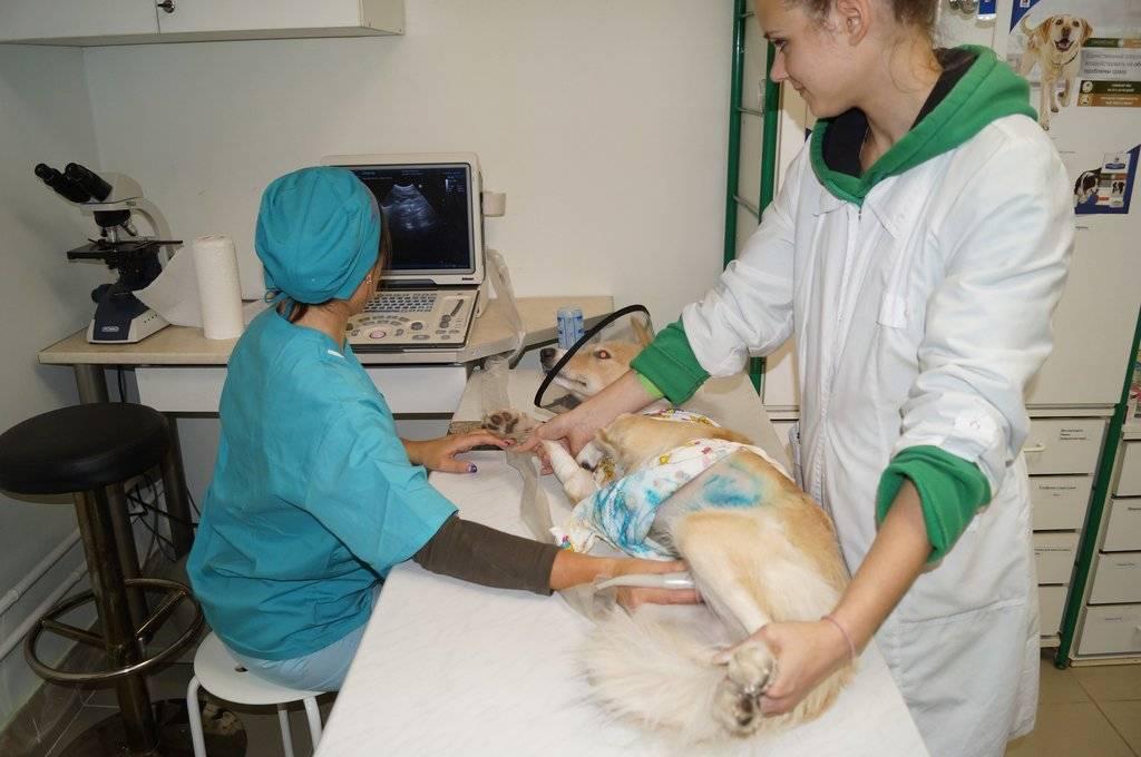 Ветеринарная клиника толстый лори - цены и отзывы , стр 5