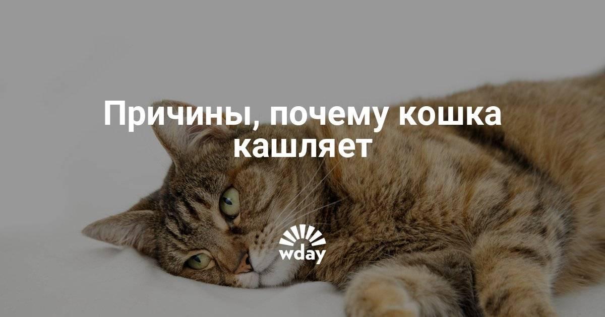 Кошка хрипит, слышны хрипы - симптомы, лечение, препараты, причины появления   наши лучшие друзья