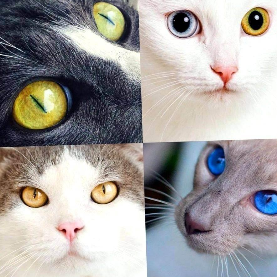 Какие цвета различают собаки и кошки — в каком цвете видят коты?