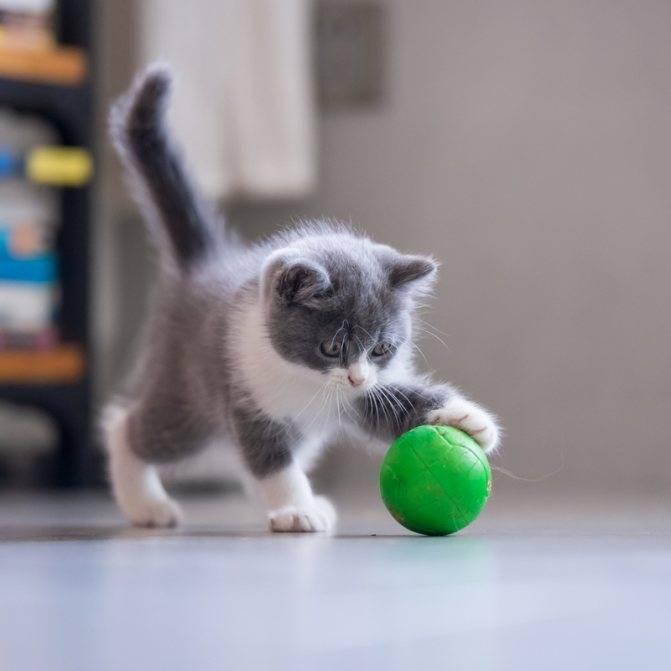 5 способов отучить котенка кусаться и царапаться
