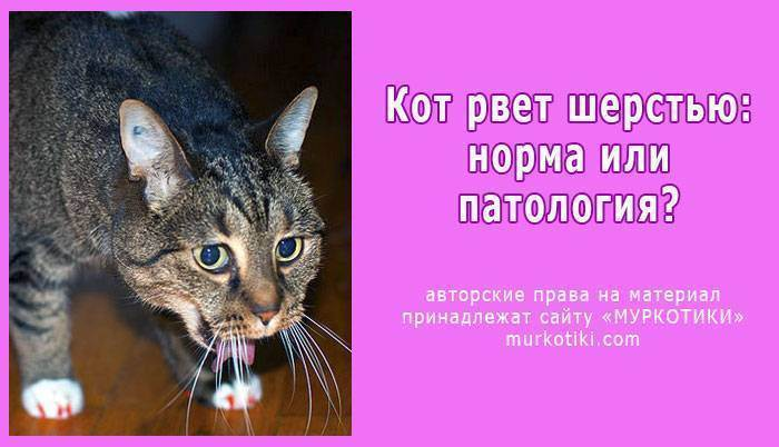 Рвота у котов и кошек - симптомы, лечение, препараты, причины появления | наши лучшие друзья